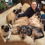Actual Pug may or may not be shown in photo. (They have a lot of Pugs)