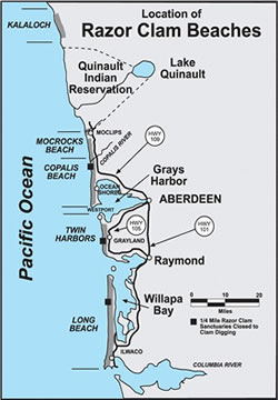 Beaches in Washington with razor clam fisheries include: Long Beach, which extends from the Columbia River to Leadbetter Point. Twin Harbors Beach, which extends from the mouth of Willapa Bay north to the south jetty at the mouth of Grays Harbor. Copalis Beach, which extends from the Grays Harbor north jetty to the Copalis River, and includes the Copalis, Ocean Shores, Oyhut, Ocean City and Copalis areas. Mocrocks Beach, which extends from the Copalis River to the southern boundary of the Quinault Reservation near the Moclips River, including Iron Springs, Roosevelt Beach, Seabrook, Pacific Beach and Moclips. Kalaloch Beach, which extends from the South Beach Campground to Brown's Point (just south of Beach Trail 3) in the Olympic National Park. (This beach is closed to harvest until further notice)