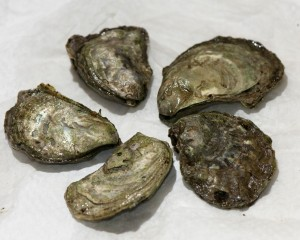 Hatfield's bill designating official oyster passes Senate