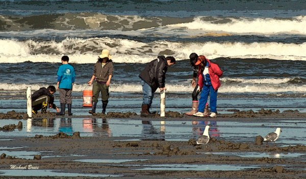 Eight days of morning razor clam digs approved, starting April 17 on Long Beach, Twin Harbors, and Mocrocks