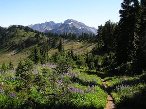 Public meeting tonight on Wilderness Stewardship Plan for Olympic National Park