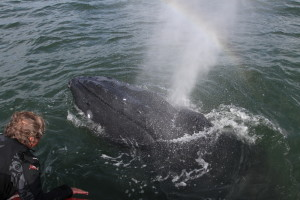 Humpback whale freed from fishing gear near Grays Harbor