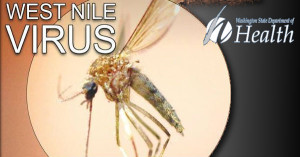 West Nile virus infection confirmed in Washington resident