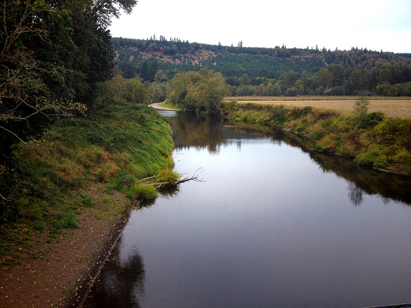 Chehalis basin projects will open 130 miles of streams to for Chehalis river fishing