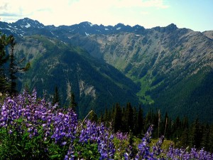 Olympic National Park Staff Prepare for Summer Season: Come Find Your Park This Spring
