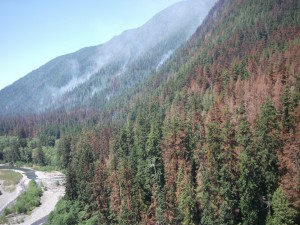 No new growth for Paradise Fire, crews are holding the line in Olympic National Park