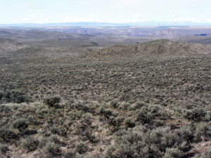 Volunteers track progress of Washington Sage-Grouse