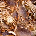 Tests suggest Oregon crabbing could re-open soon
