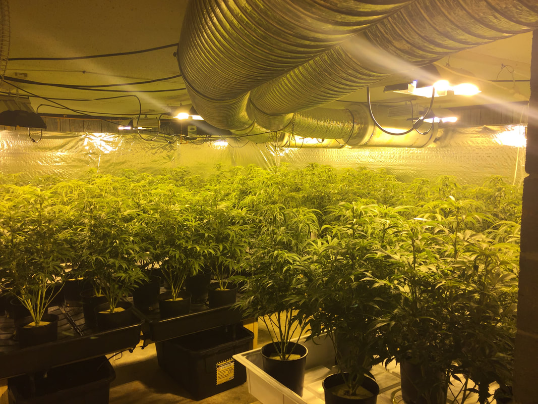 Three Pacific County Homes Included in Recent Busts of Illegal Marijuana Grow Operations